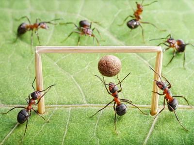 goal in gate, ants play soccer
